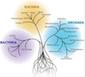 tree cellula